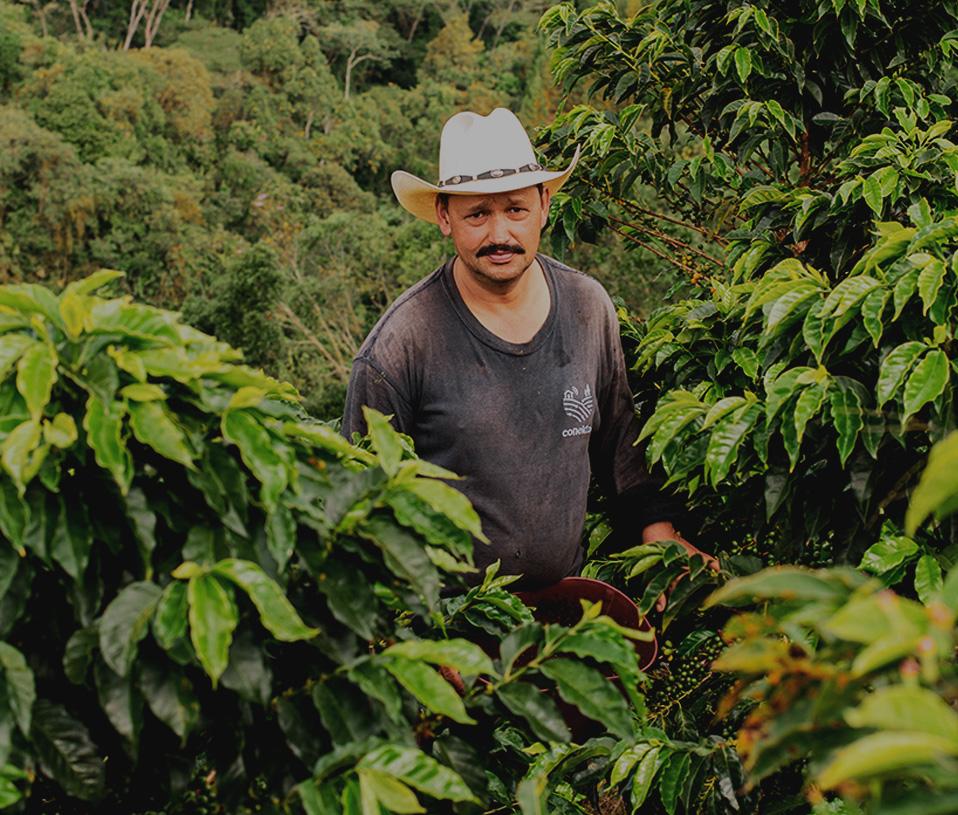culegator cafea columbia